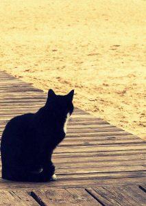 Eine Katze schaut auf Sand