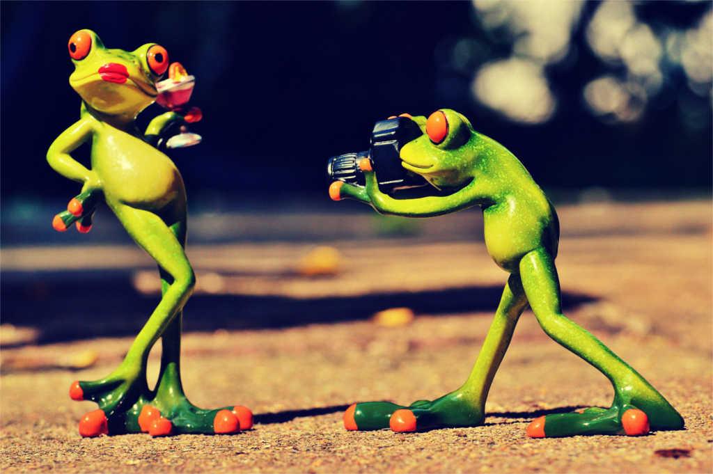 Ein Frosch fotografiert einen anderen Frosch