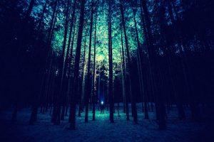 Jemand steht im Wald mit einer Taschenlampe