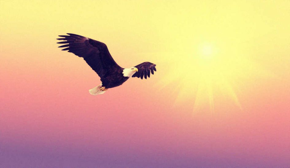 Ein Adler im Sonnenuntergang