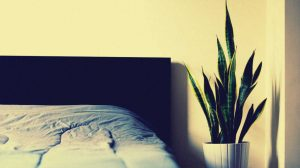 Leeres Bett mit Pflanze